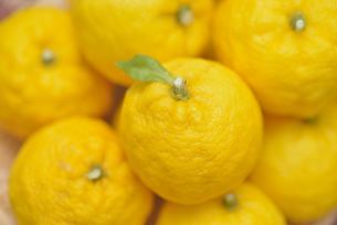 ゆず 柚子の写真素材 [FYI04629208]