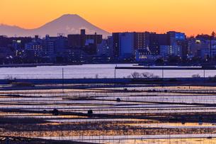 茨城県 土浦より富士山を望むの写真素材 [FYI04629364]