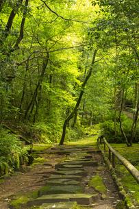 立田自然公園の写真素材 [FYI04629485]