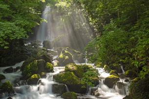 白糸の滝の写真素材 [FYI04629602]