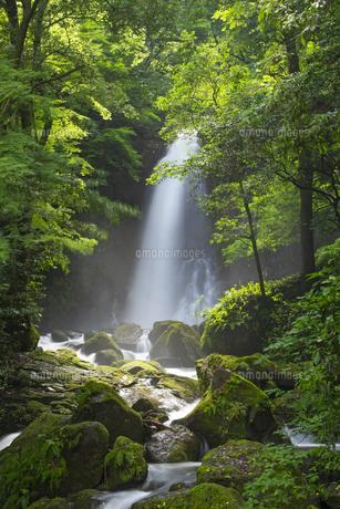 白糸の滝の写真素材 [FYI04629604]