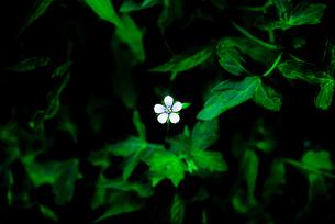 小さく美しい花の写真素材 [FYI04629867]