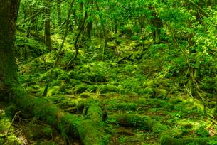 緑の森の写真素材 [FYI04629871]
