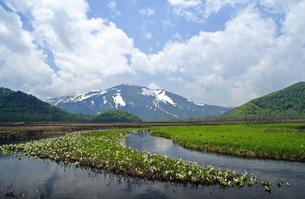 6月 ミバショウ咲く尾瀬ヶ原と至仏山の写真素材 [FYI04630017]