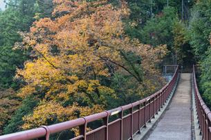 あきる野市 石舟橋の紅葉の写真素材 [FYI04630195]