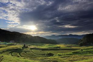 島根県大東町の山王寺棚田からの日の出の写真素材 [FYI04630206]