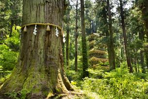 羽黒山五重塔と爺杉の写真素材 [FYI04630237]