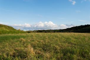 快晴の空と黄色がかった緑の草原の写真素材 [FYI04630452]