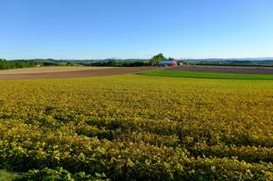 収穫間近の畑の写真素材 [FYI04630479]