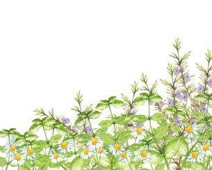 ハーブガーデン水彩画のイラスト素材 [FYI04630795]
