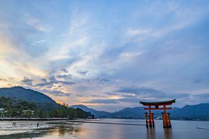 夕暮れ時の厳島神社大鳥居の写真素材 [FYI04631126]