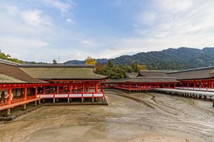 厳島神社 干潮時の本殿と客神社の写真素材 [FYI04631172]