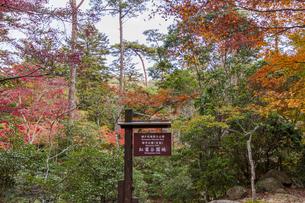 瀬戸内海国立公園・紅葉谷園地の散策路の写真素材 [FYI04631181]
