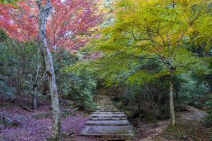 瀬戸内海国立公園・紅葉谷園地の散策路の写真素材 [FYI04631182]