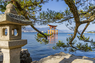 厳島神社 能樂屋側の灯篭越しに望む大鳥居の写真素材 [FYI04631185]