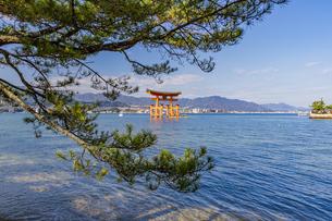 厳島神社 能樂屋側から大鳥居を望むの写真素材 [FYI04631186]