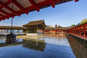 厳島神社 間もなく干潮を迎える能舞台の写真素材 [FYI04631187]