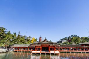 厳島神社 平舞台から客神社祓殿を臨むの写真素材 [FYI04631198]