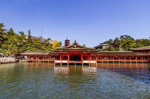 厳島神社 平舞台から客神社祓殿を臨むの写真素材 [FYI04631201]