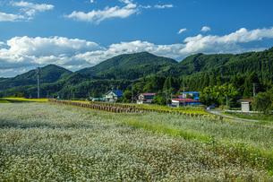 秋景の写真素材 [FYI04631306]