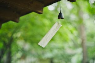 風鈴と森の写真素材 [FYI04631363]