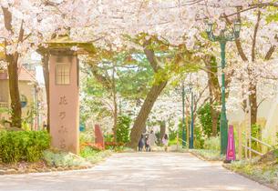 関西の風景 宝塚市 桜並木と花のみちの写真素材 [FYI04631399]