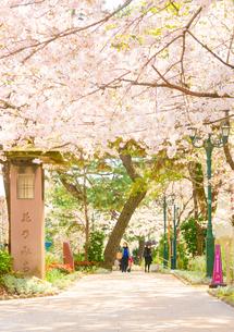 関西の風景 宝塚市 桜並木と花のみちの写真素材 [FYI04631400]