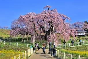 三春の滝桜の写真素材 [FYI04631684]
