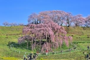 三春の滝桜の写真素材 [FYI04631686]