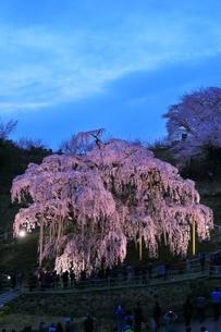 三春の滝桜のライトアップの写真素材 [FYI04631702]