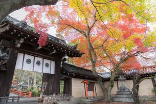 京都 今宮神社の紅葉の写真素材 [FYI04631709]