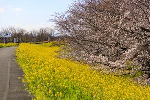 埼玉県 熊谷桜堤の写真素材 [FYI04632797]