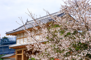茨城県 水戸城 大手門の写真素材 [FYI04632798]