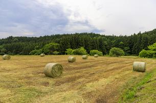 牧草地の牧草ロールの写真素材 [FYI04632822]