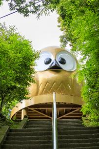 栃木県 本宮神社の写真素材 [FYI04632835]