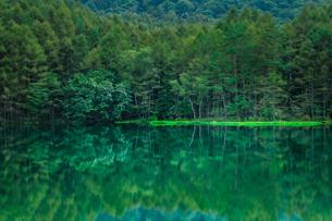 鏡うつる森の緑の写真素材 [FYI04633052]