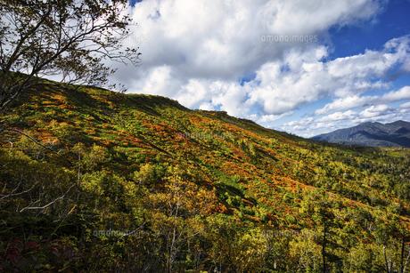 日本一早い紅葉、秋の北海道銀泉台の写真素材 [FYI04633063]