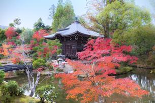 京都 清凉寺 弁天堂の紅葉の写真素材 [FYI04633108]