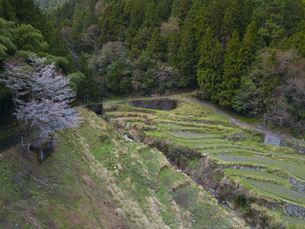 徳島県 下影棚田の写真素材 [FYI04633207]
