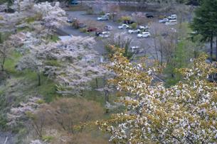 桜とダムの写真素材 [FYI04633257]