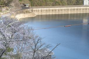 桜とダムの写真素材 [FYI04633259]