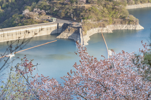 桜とダムの写真素材 [FYI04633260]