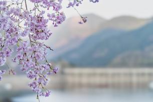 桜とダムの写真素材 [FYI04633264]