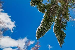 乗鞍高原の雪景色の写真素材 [FYI04633269]