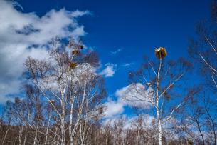 乗鞍高原の雪景色の写真素材 [FYI04633270]