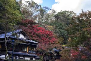 箕面の紅葉と音羽山荘の写真素材 [FYI04633326]