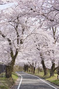 赤城南面千本桜の写真素材 [FYI04633336]