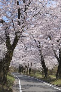 赤城南面千本桜の写真素材 [FYI04633342]