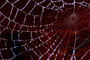 蜘蛛の巣についた雨粒の写真素材 [FYI04633379]
