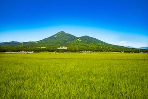 磐梯山と稲穂の写真素材 [FYI04633483]